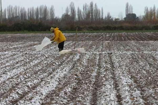 México: Plantaciones de guayaba congeladas tras frente de mal tiempo