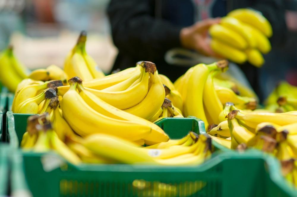 Debido a plaga en el banano, R. Dominicana suspende importaciones de Colombia y Perú