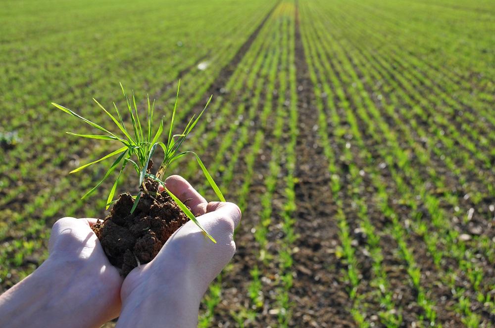 Fertilización de cultivos orgánicos: un desafío ético. Por Antonio ...