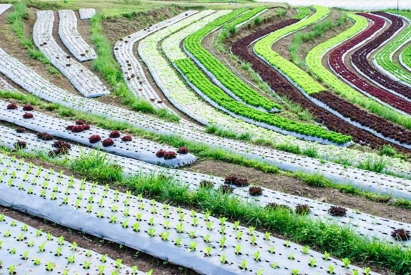 Manual Práctico Para Construcciones De Terrazas Agrícolas