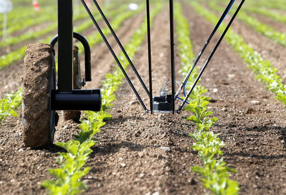 Robots que controlan plantas no deseadas