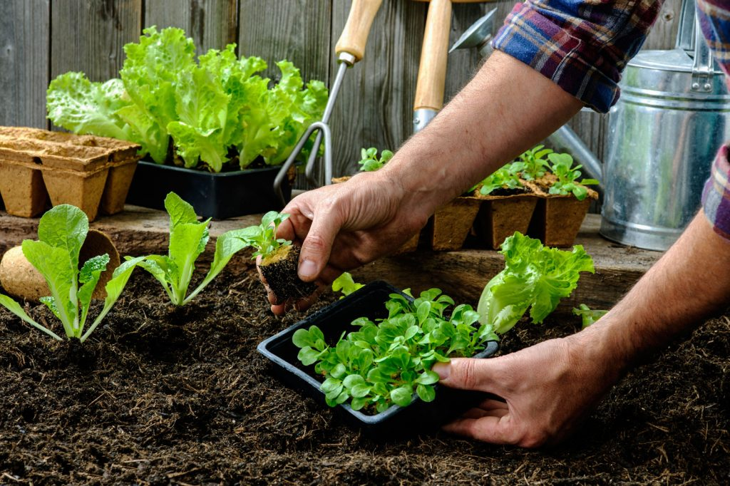 Calendario de siembra de hortalizas en el hemisferio sur por ...