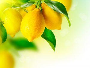Limones - limoneira