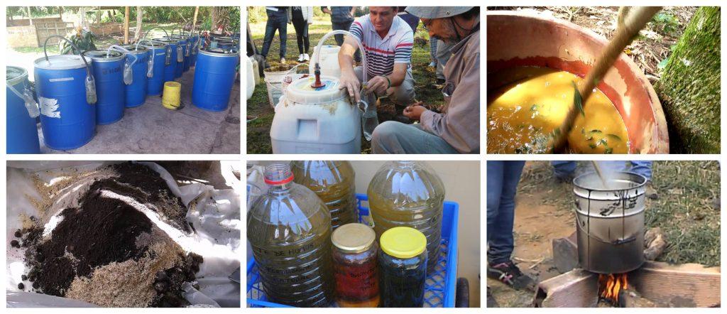 Guía de biopreparados para el manejo sostenible de plagas y enfermedades en la agricultura