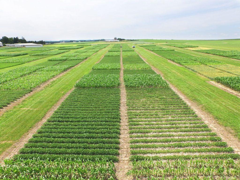 Consideraciones en la rotación de cultivos: beneficios y listado de  especies para asociar -