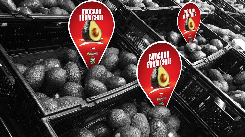 Comité de Palta Hass de Chile inicia campaña de promoción en China resaltando las ventajas de esta fruta y sus beneficios para la salud