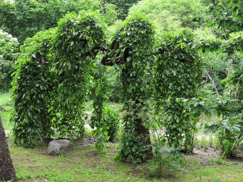 Qué Son Las Moreras Guía Básica Para Su Cultivo