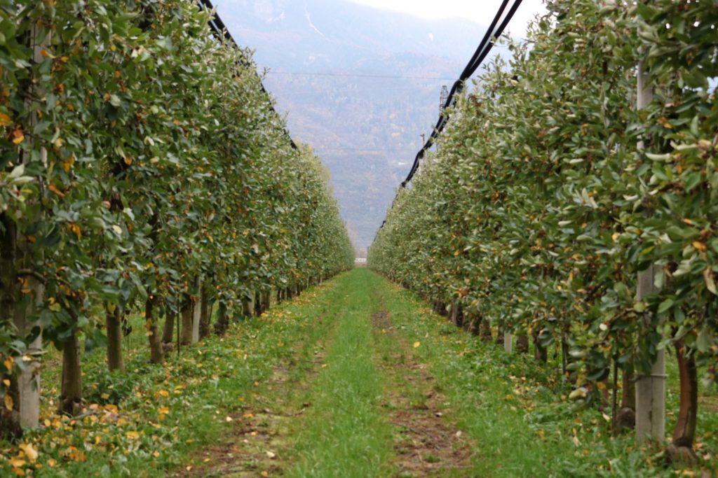 Visita a huerto de manzanas italianas durante Interpoma 2018