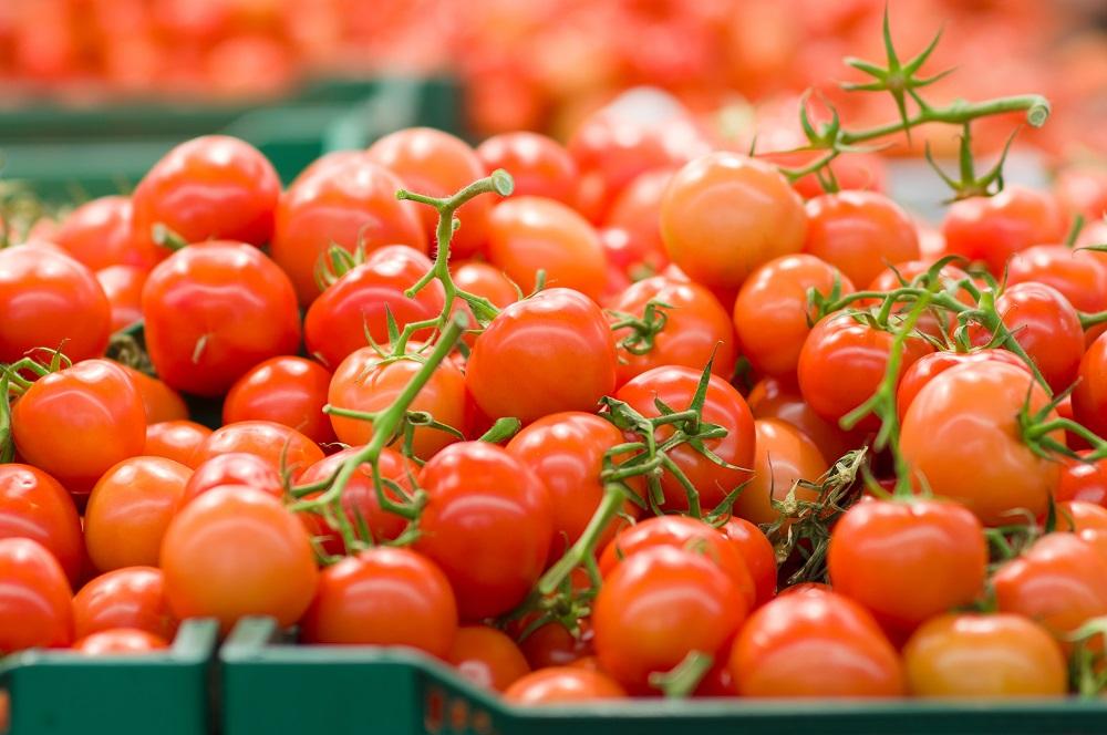 Estudio: Efectos de la refrigeración en el sabor de los tomates