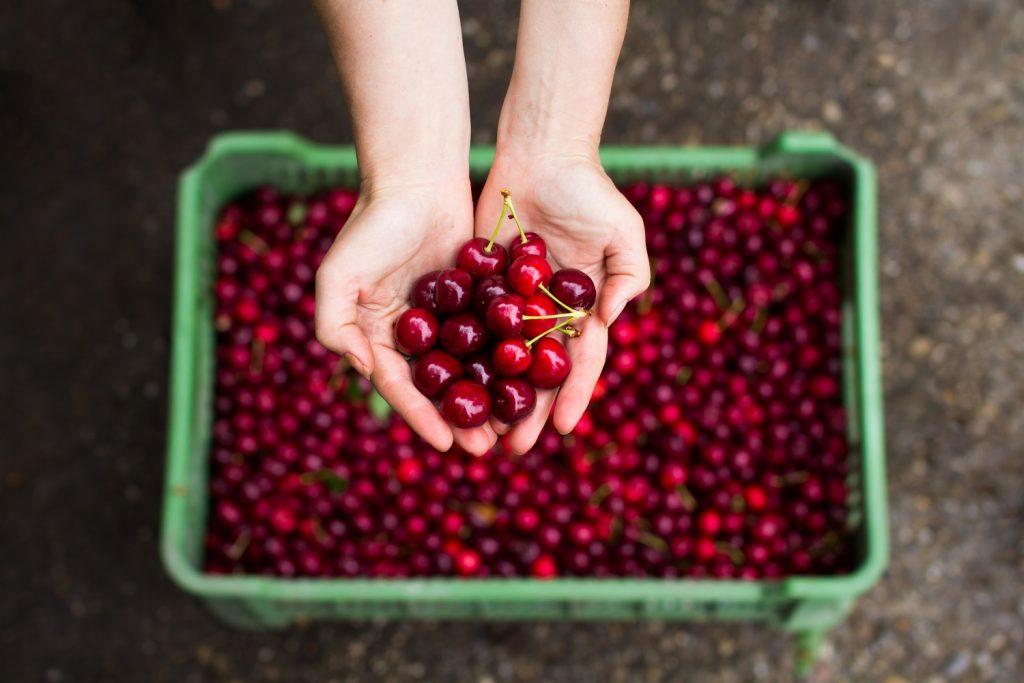 Coloquio de cerezas analizará producción eficiente y sostenible en sur de Chile