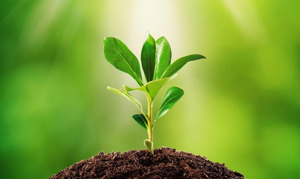 Columna de opinión: Transformación digital. Cinco pilares claves en la agricultura de la nueva década