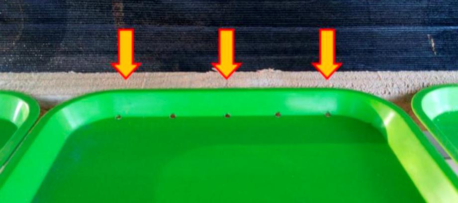 Forraje hidropónico, una opción para la pequeña ganadería 4