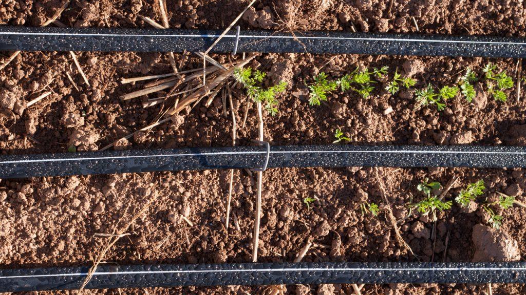 sustancias orgánicas y preparados en la fertirrigación