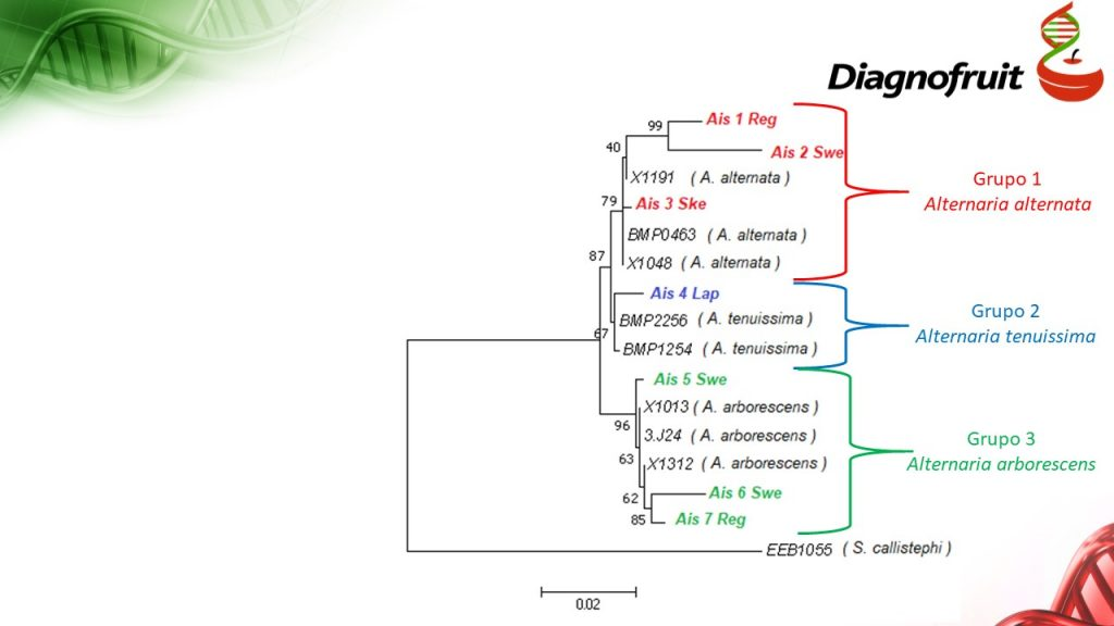 Dendrograma de Afiliación Genética de Aislados de Alternaria