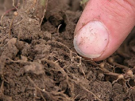 nematodos en el suelo