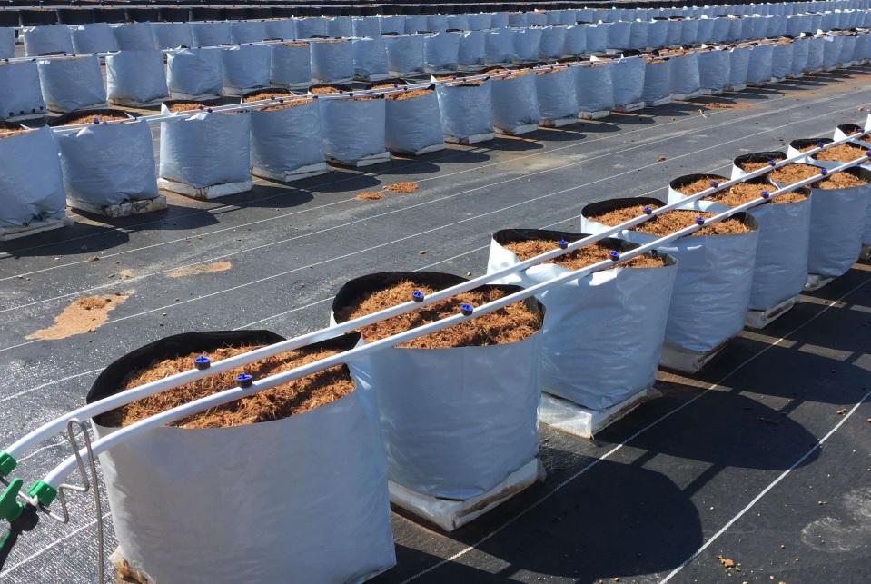 sistema de producción estopa de coco