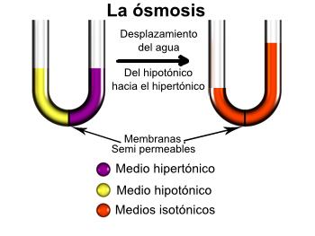 osmosis en hidroponía