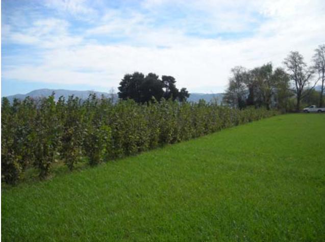 biofiltros cobertura herbácea