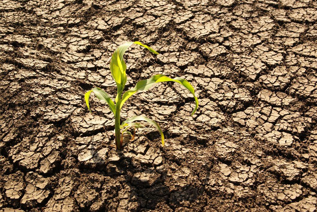 planta en suelo seco