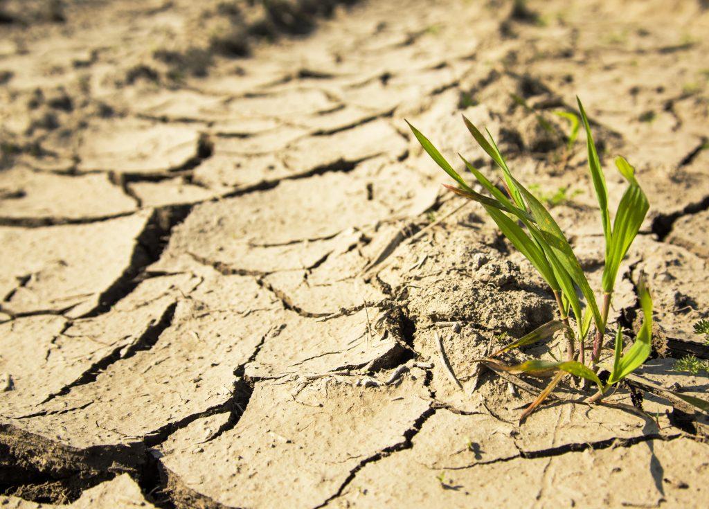 plantita en suelo seco
