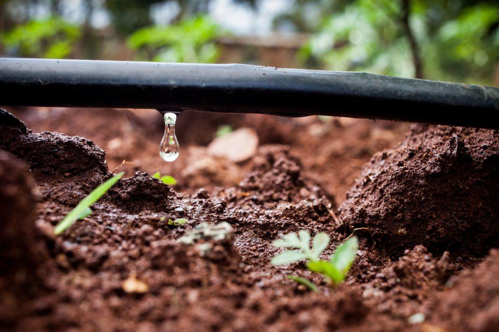 ¿Por qué elegir el riego por goteo sobre otras técnicas de irrigación?