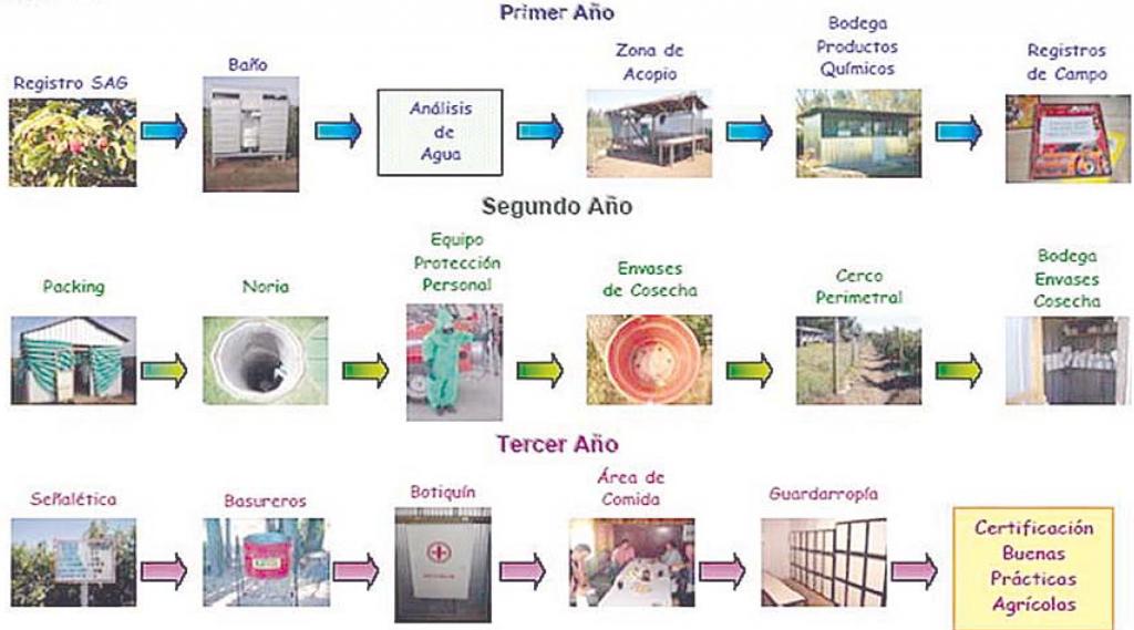 etapas de buenas prácticas agrícolas en la producción de frambuesas