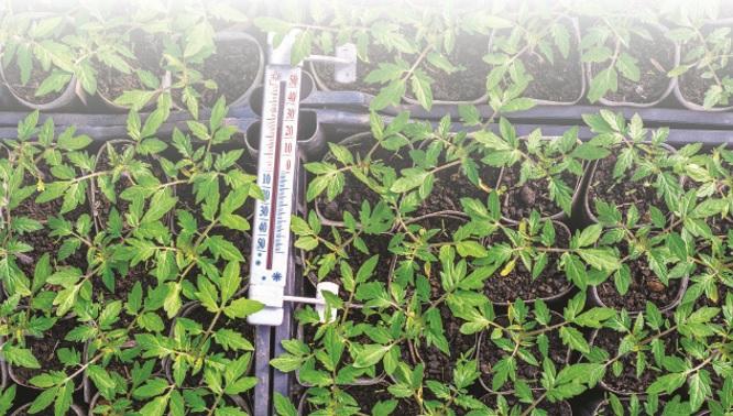propagación del corte vegetal