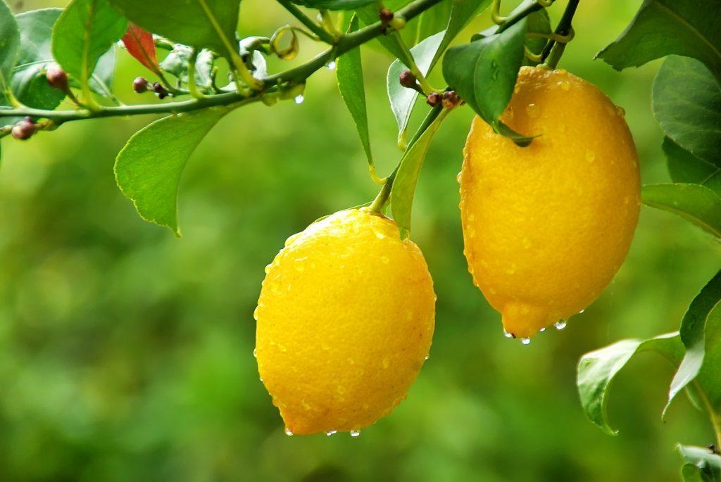 Debido a incendios forestales en México, se perdieron casi 1.000 hectáreas de limones