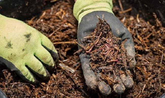Lombrices, humus, abonos y lombricultura