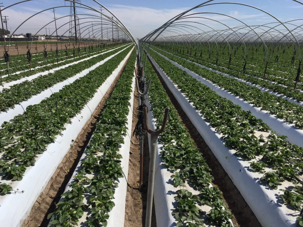 microaspersores para la aplicación de fertilizantes