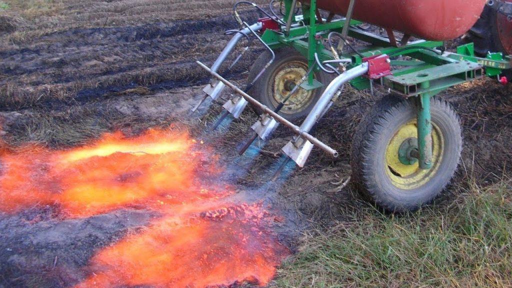 Tractores lanzallamas en agricultura ecológica para disminuir pesticidas y herbicidas