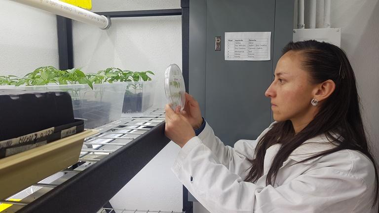 bioestimulante que protege semillas