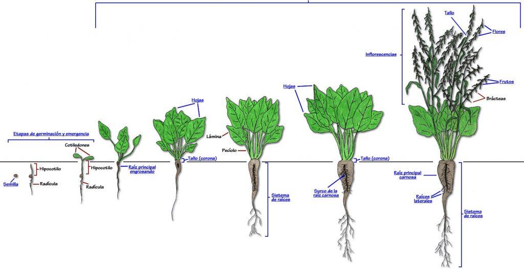 Vernalización en los cultivos