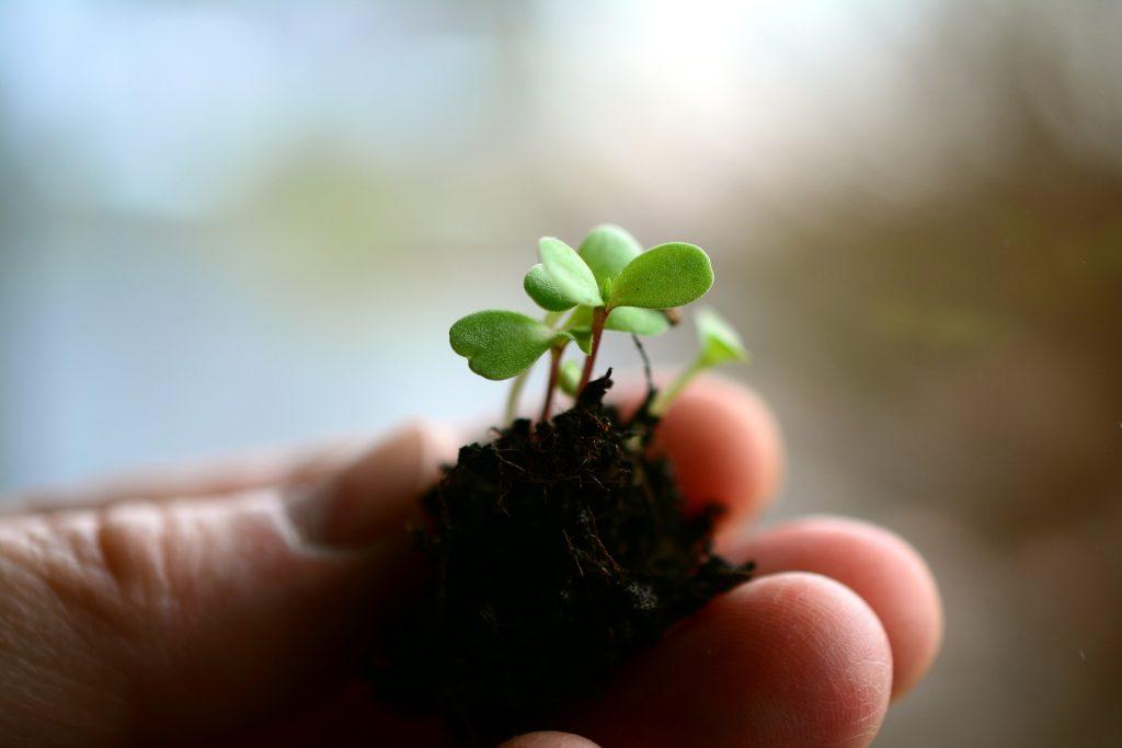 sustratos para la producción protegida de alimentos