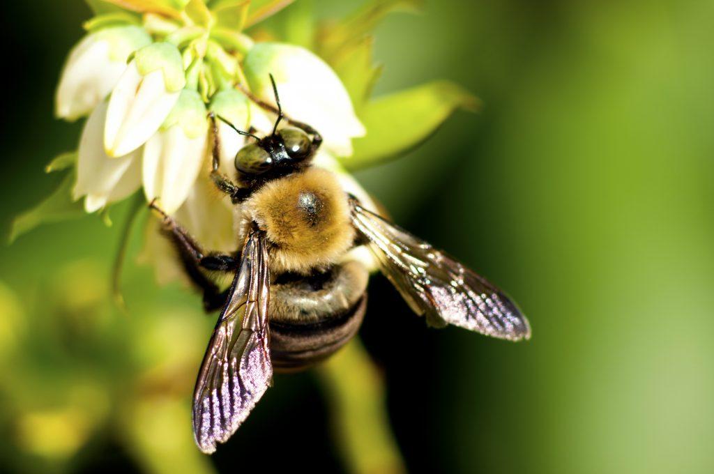 Beewaze: Colmenas inteligentes al rescate de las abejas