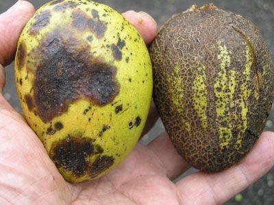 El oxicloruro de cobre y su función en la agricultura