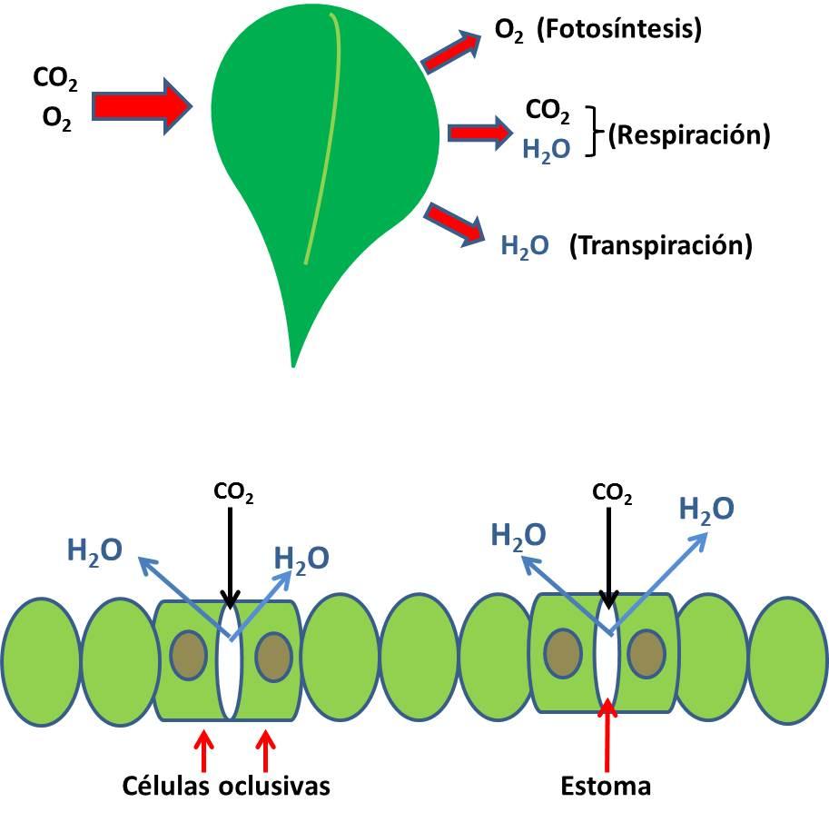 la sequía en las plantas