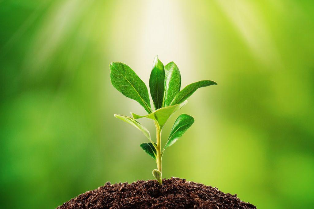 Estudio: Plantas seleccionan los microbios que viven dentro de sus hojas para mantenerse saludables