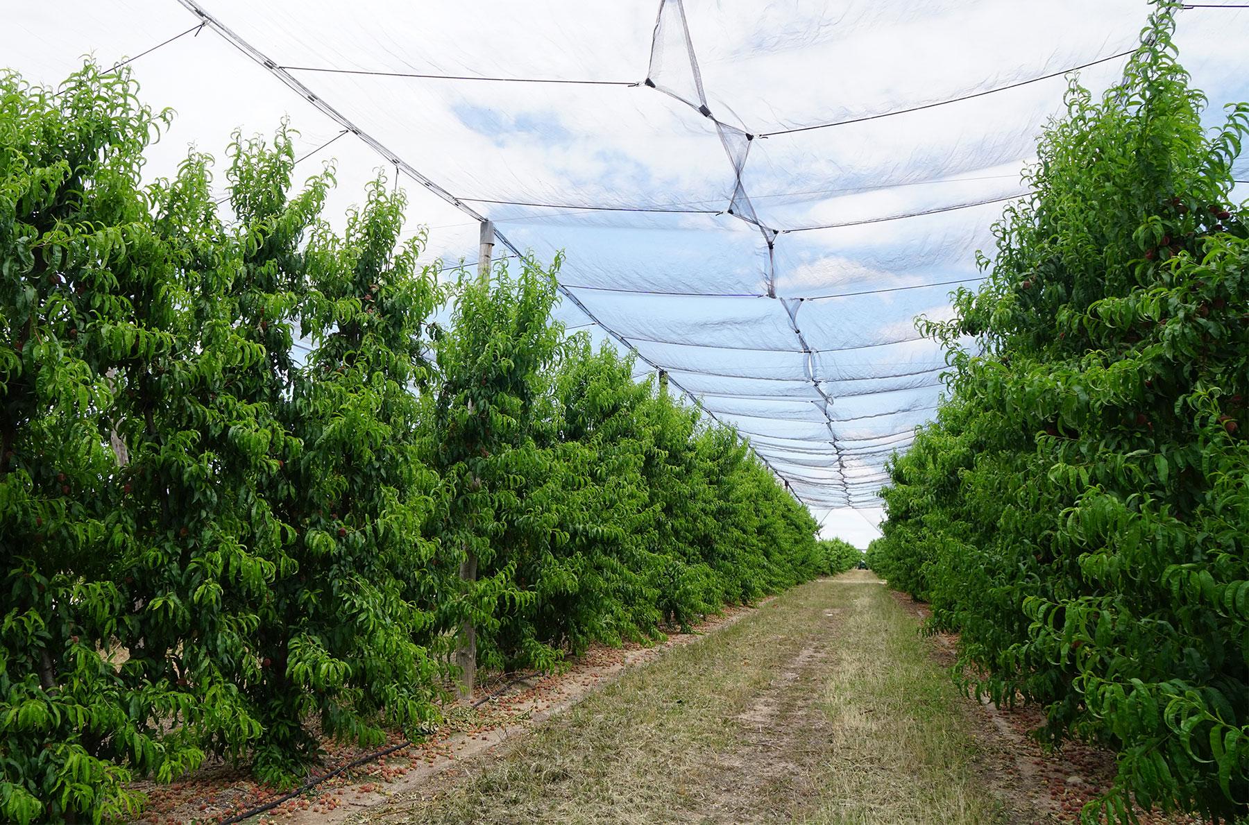 cultivos, silicio en agricultura