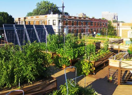 Guía Para El Cultivo En Azoteas Techos Verdes