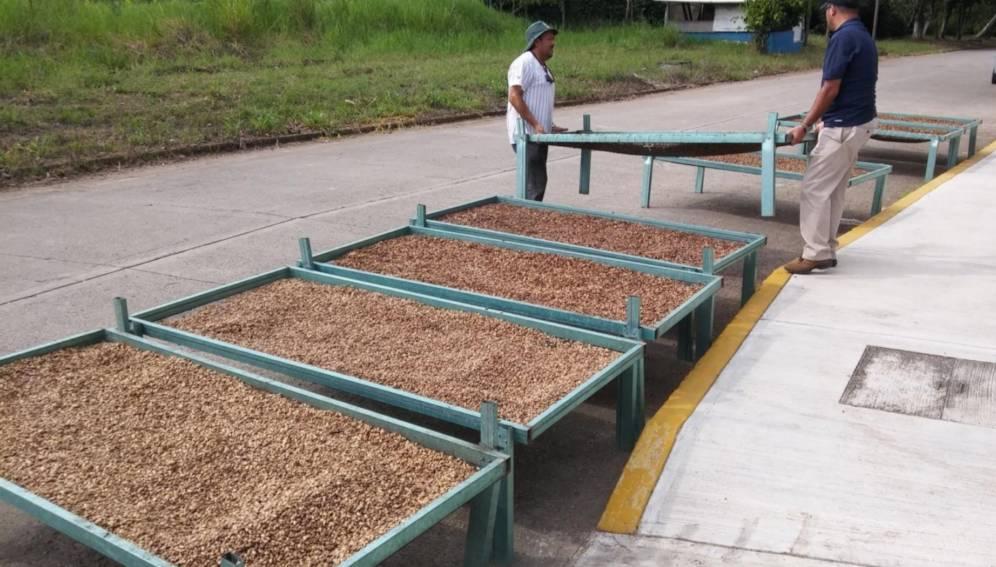 insecticida ecológico