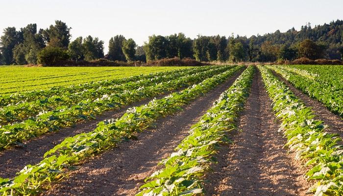 Estudio afirma queescarabajos podrían ser futuro control de plagas en cultivos