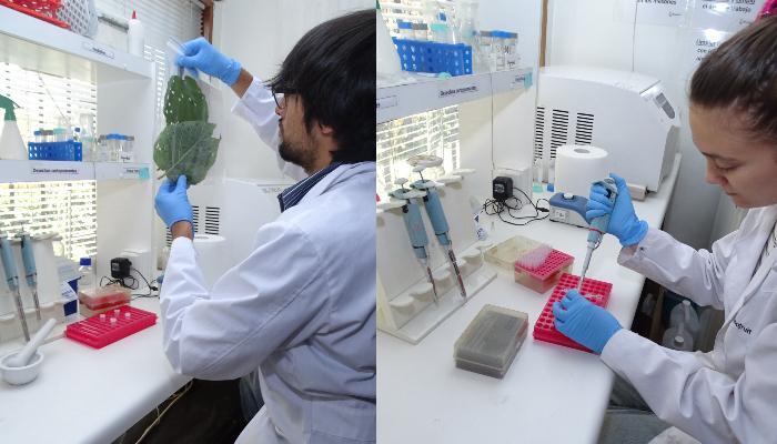Columna Técnica: Biotecnología y su importancia en la generación de una Fruticultura Sustentable, Parte I