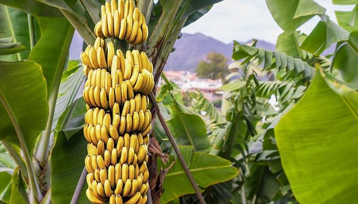 Clúster Bananero del Ecuador tuvo agenda con el presidente Guillermo Lasso para exponer cuatro vías que potencien la competitividad del gremio