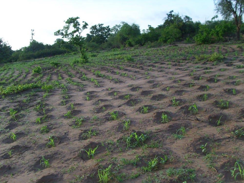 Técnica de agricultura para zonas con sequía
