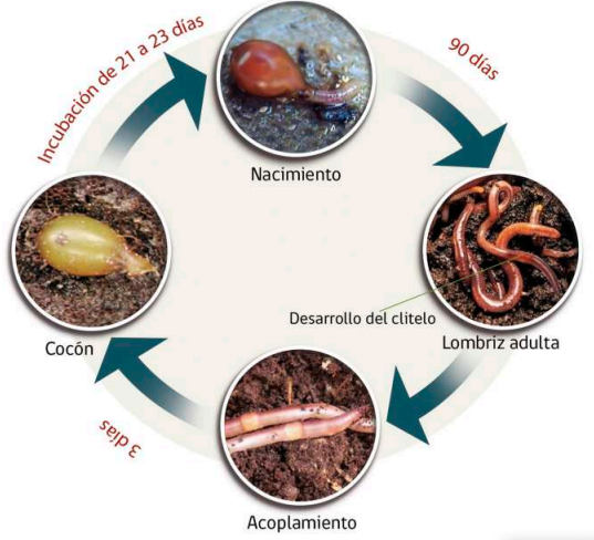 lombricompost o vermicompost