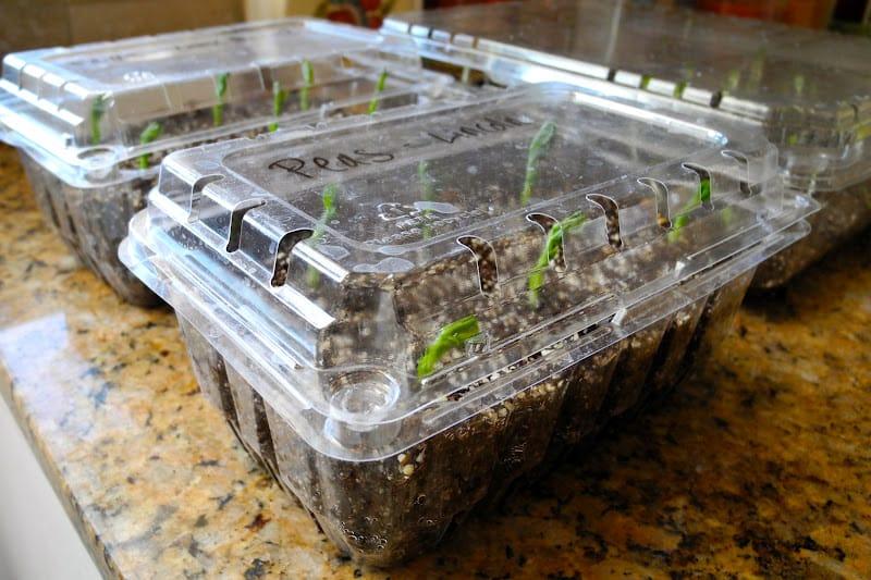Mini invernaderos reciclados de plástico