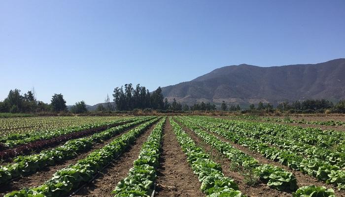 Seminario online: Expertos de la Unión Europea y Chile se unen para debatir sobre horticultura