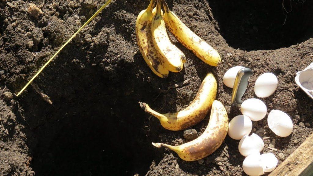 fertilizante de banana