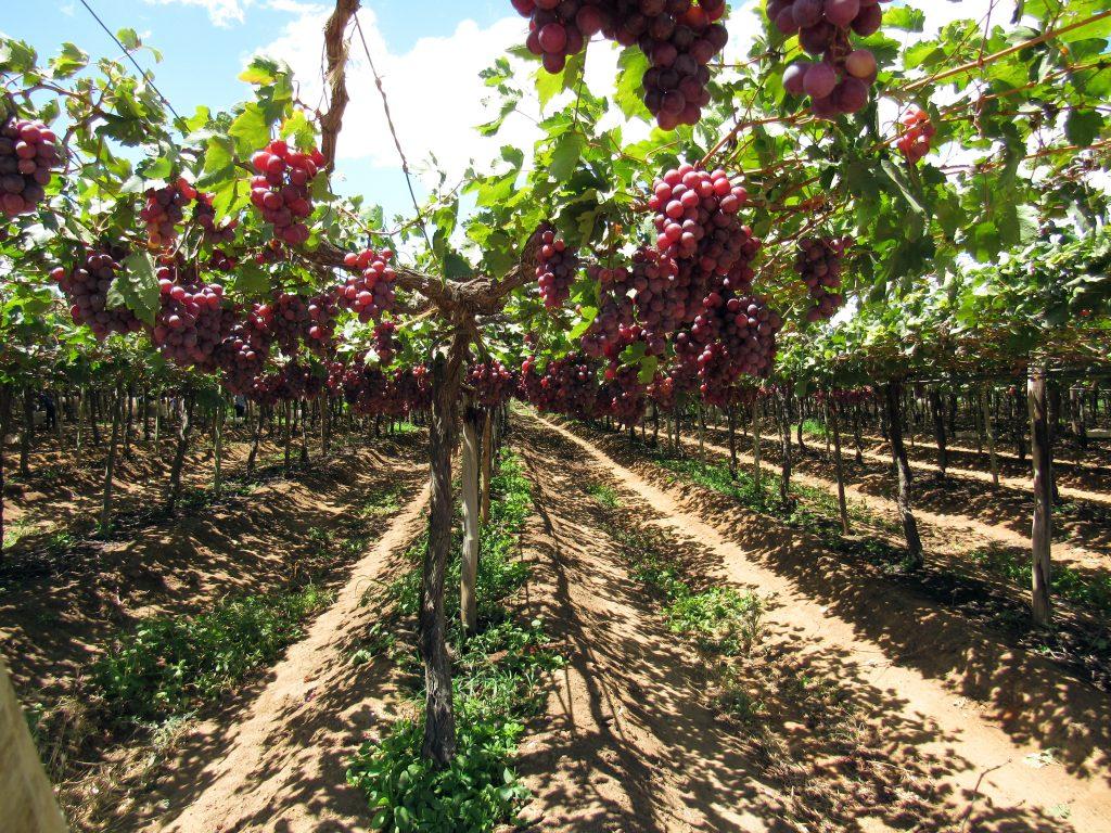 Innovación: Plataforma tecnológica permitiría mapear uso de suelo en cultivos